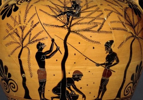 Olives in Greek Mythology